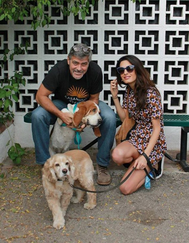George Clooney adopts a dog