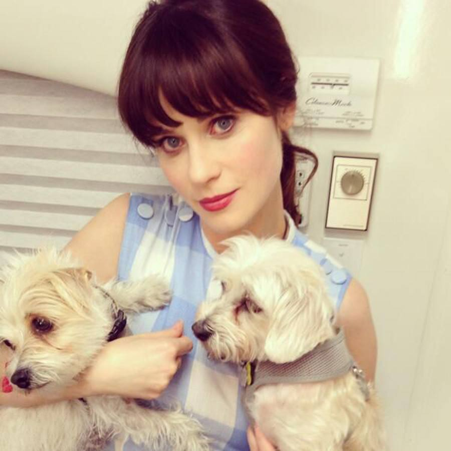 Zooey Deschanel and rescue dogs