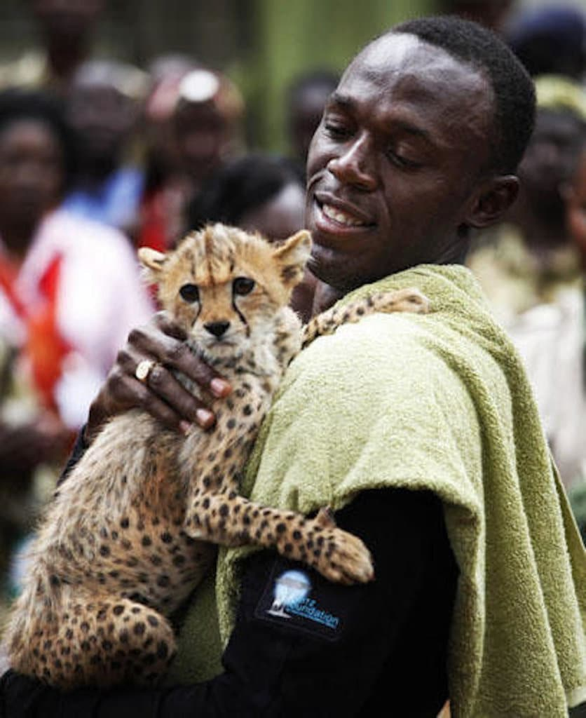 usain bolt cheetah